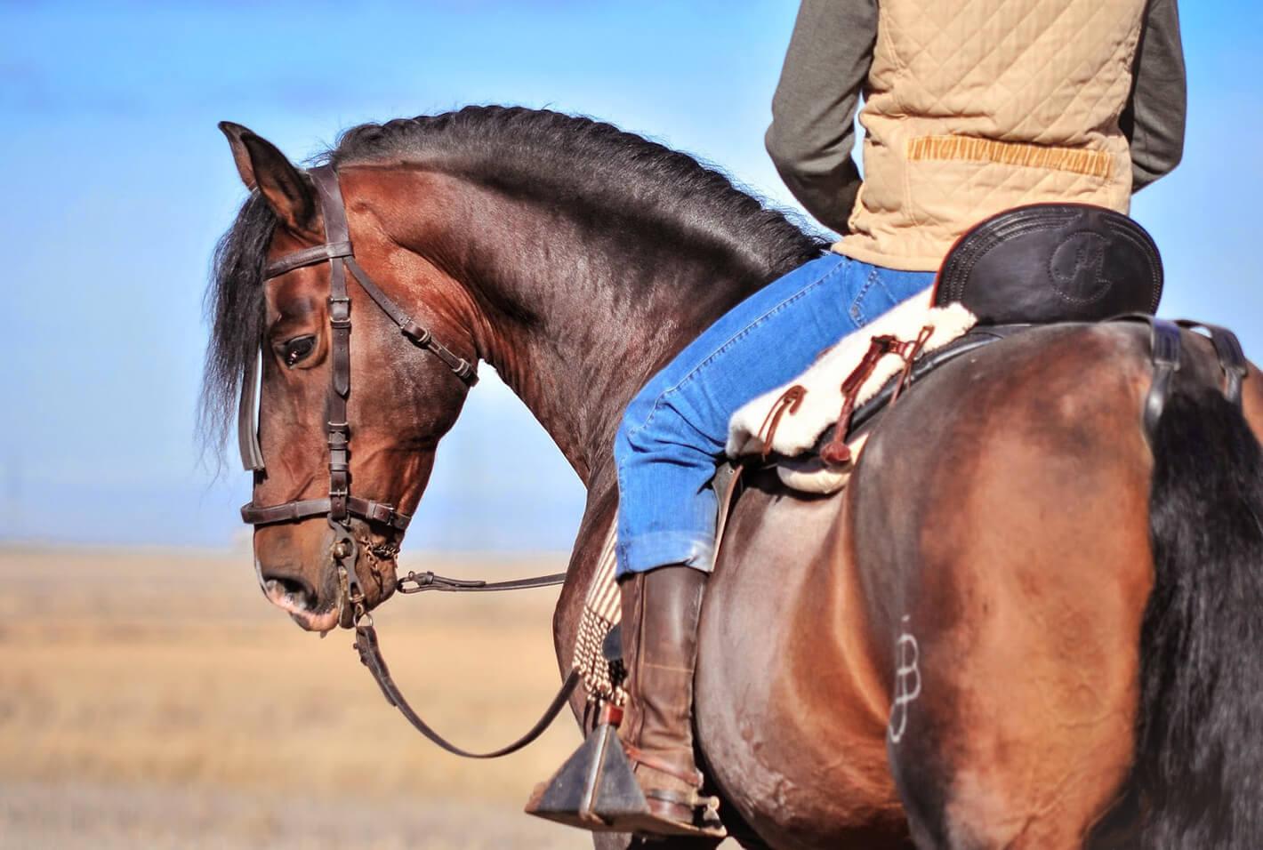 Seguro caballos